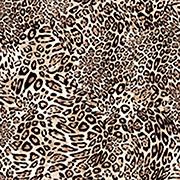 Lovely Leopard (LLD)