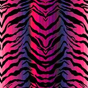 Zebra Oasis (ZBO)