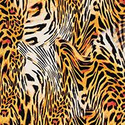 Tibetan Leopard (TNL)